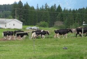 Kootenay Alpine Cheese farm